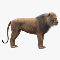 realistic rigged lion fur 3D model