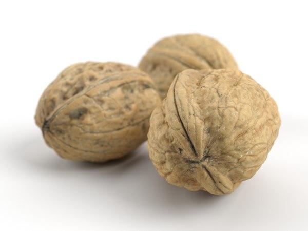 different photorealistic walnut set 3D model