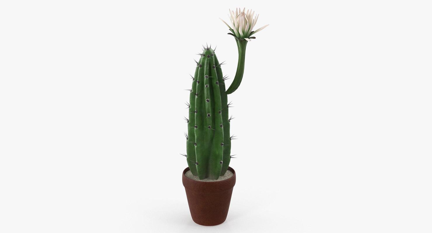 cereus blooming cactus 3D model