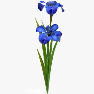 3D realistic irises flower