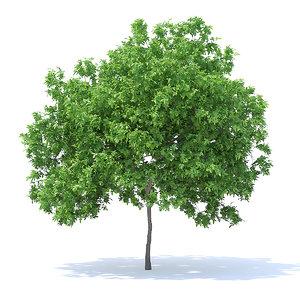 3D lemon tree 4 4m