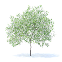 lemon tree 4 4m 3D model