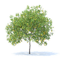 Lemon Tree with Fruits 3D Model 4.4m