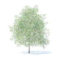 3D model lemon tree 6m