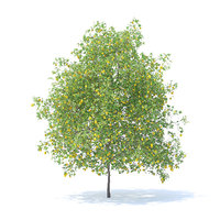3D lemon tree 6m model