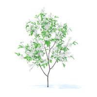 3D orange tree 1 6m
