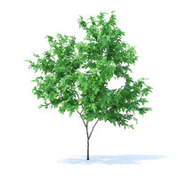 orange tree 2 1m 3D model