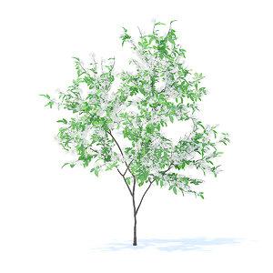 3D orange tree 2 1m