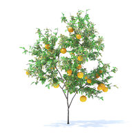 Orange Tree with Fruits 3D Model 2.1m