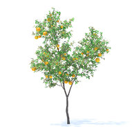 orange tree 3 4m 3D