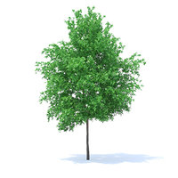 3D orange tree 6m