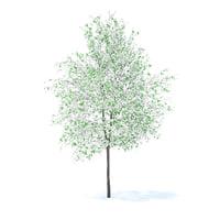 3D model orange tree 6m