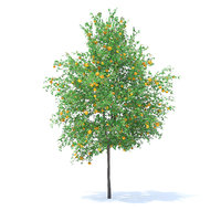 Orange Tree with Fruits 3D Model 6m