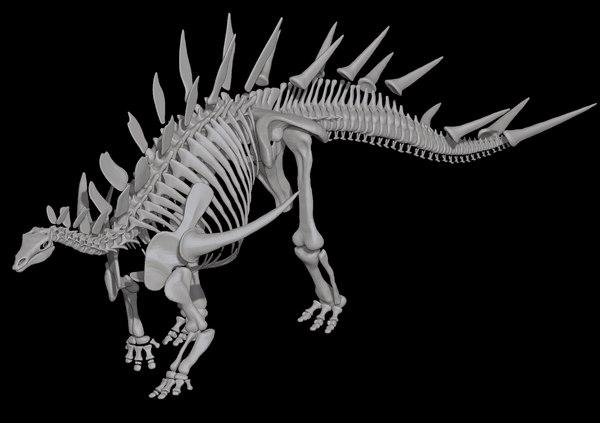 3D kentrosaurus skeleton dinosaur