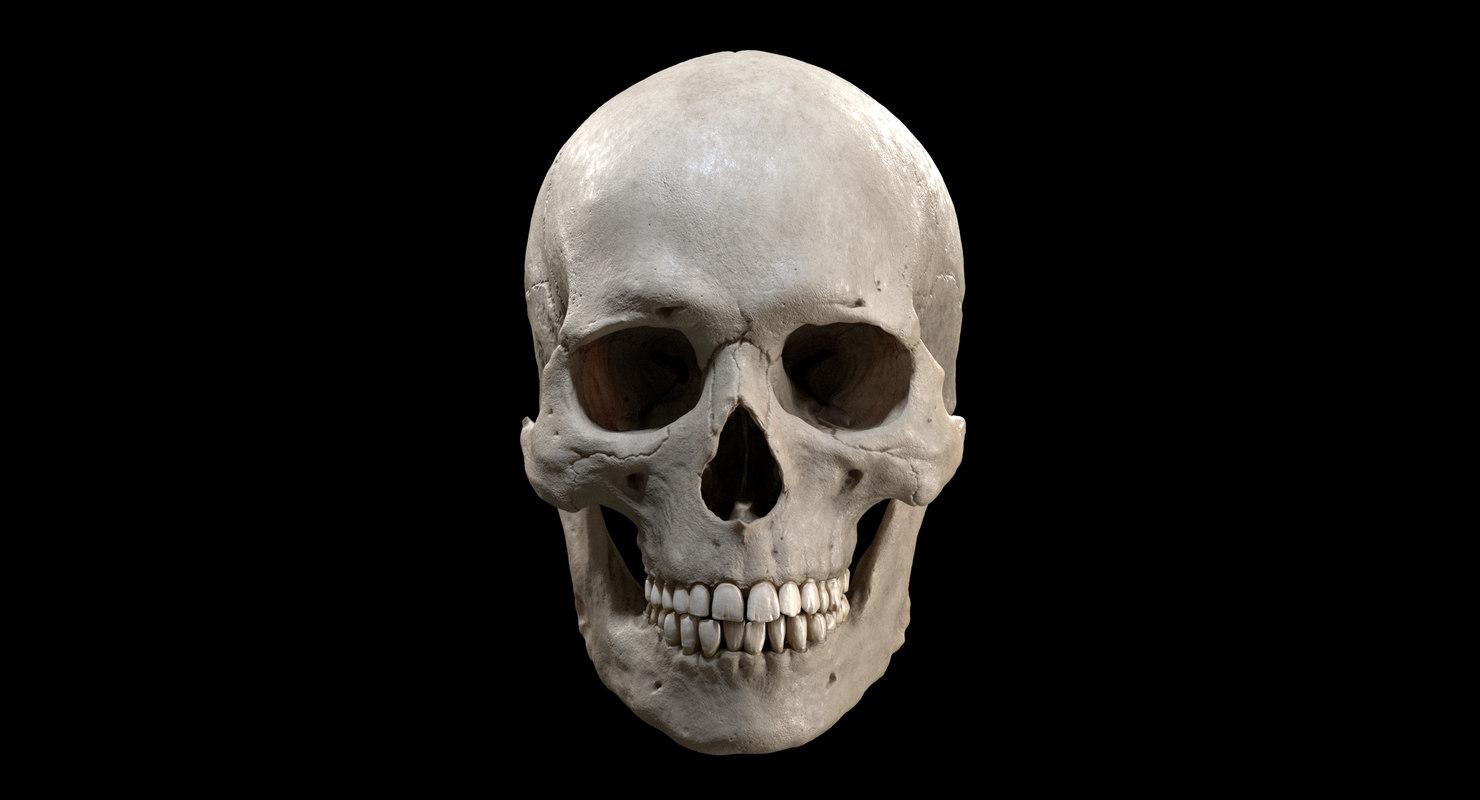 realistic human skull 3D