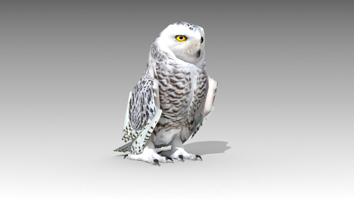 3D snowy owl