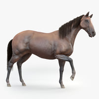 realistic rigged horse fur 3D model