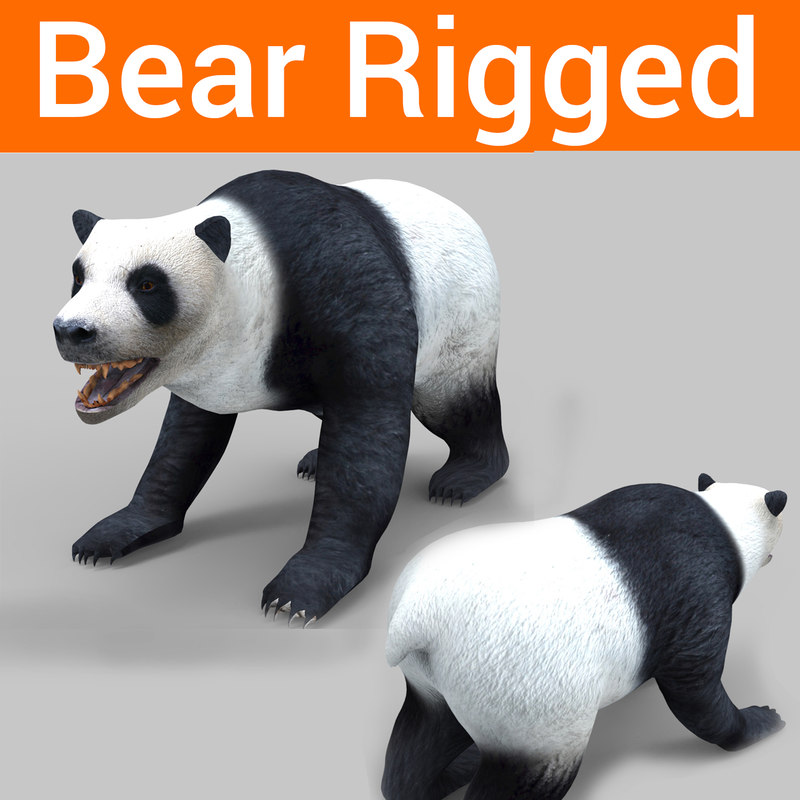 3D bear rigged model