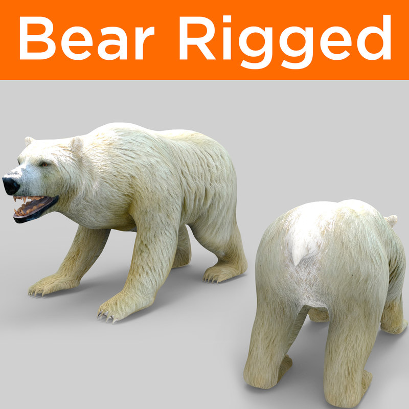 bear rigged 3D model