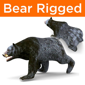 3D model bear rigged