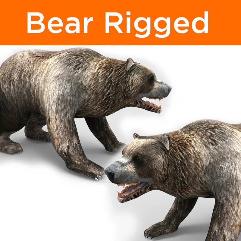 3D bear rigged