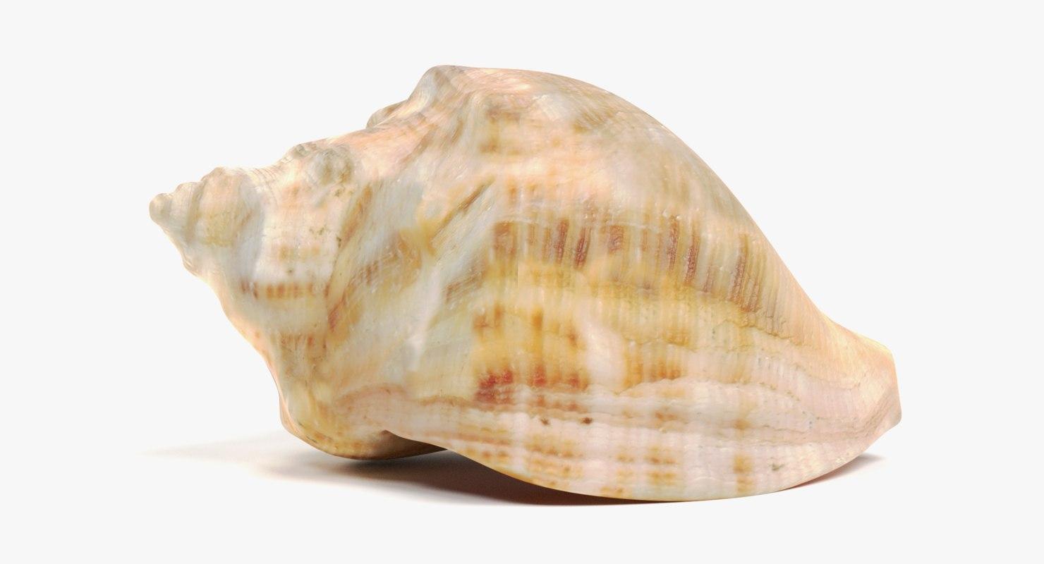 seashell pbr 3D