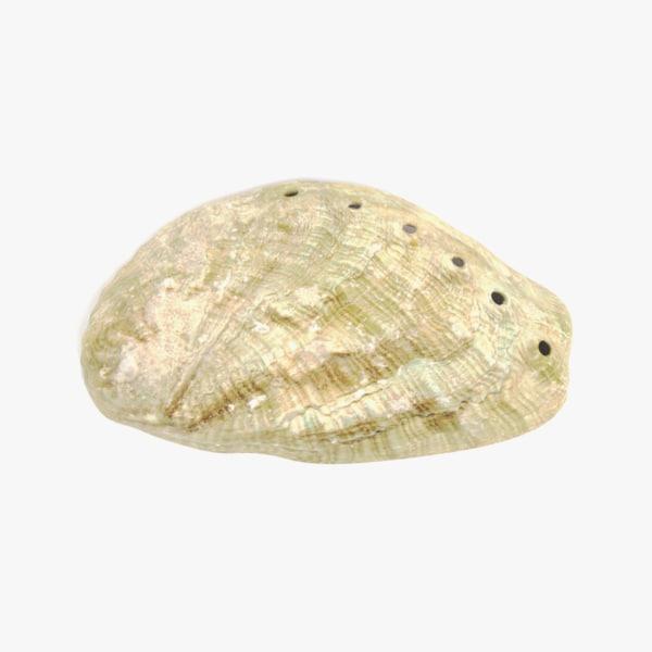 3D seashell 6 model