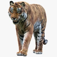 tiger rigged fur 1 3D model