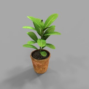 plant potted 3D