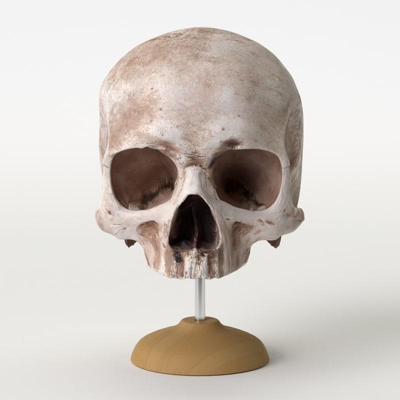 vfx based skull model
