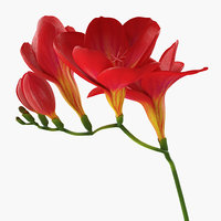 3D red freesia flower