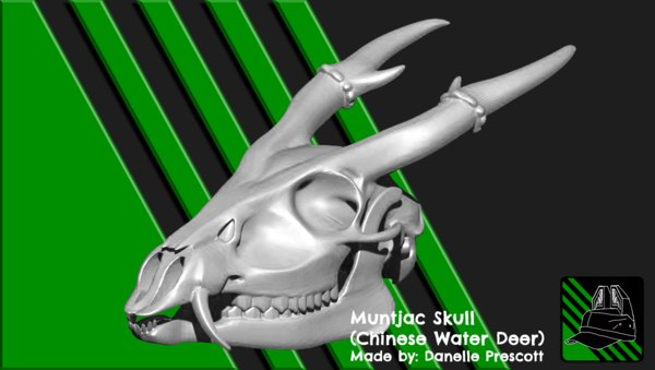 muntjac skull chinese 3D