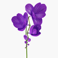 3D purple freesia flower