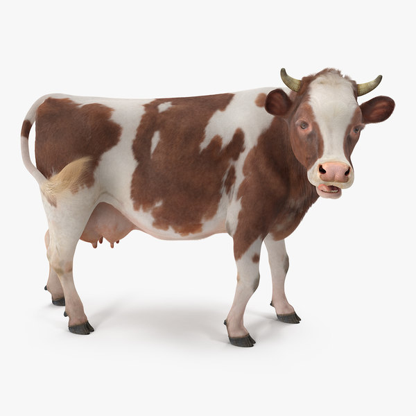 3D cow fur rigged