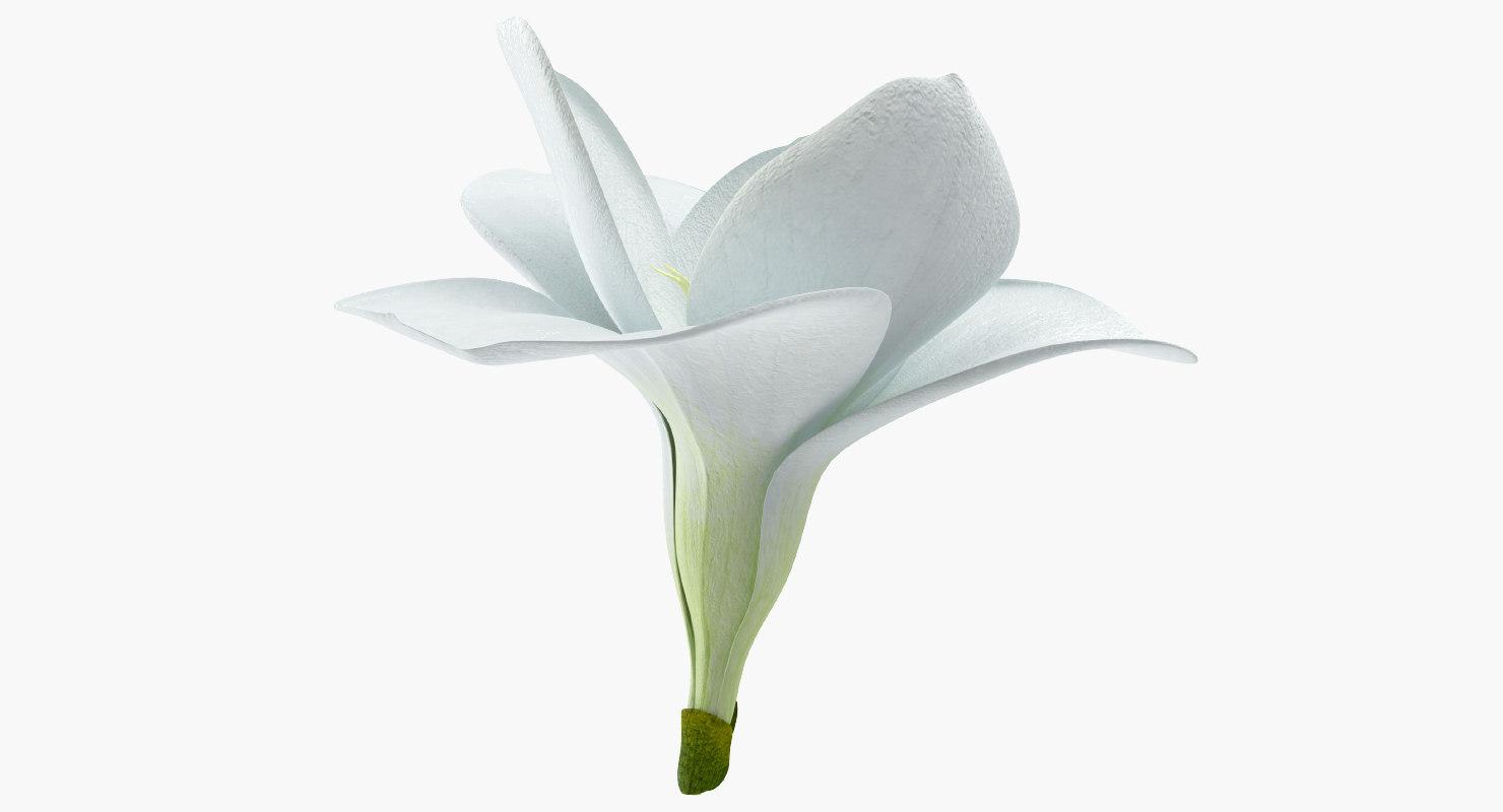 3d Freesia Flower Model Turbosquid 1255552