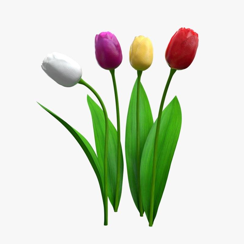 tulip realistic 3D