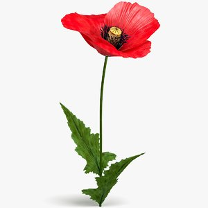 3D realistic poppy flower