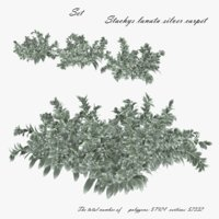 Stachys lanata silver carpet 3D model