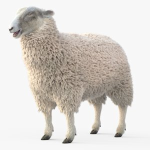 3D model adult sheep