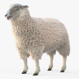 3D model adult sheep