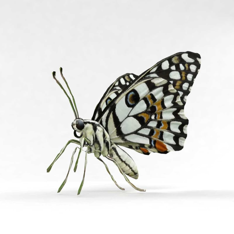 butterfly insect fly 3D model