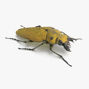 brown steampunk beetle model