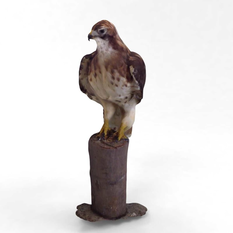 hawk fast photorealistic 3D model