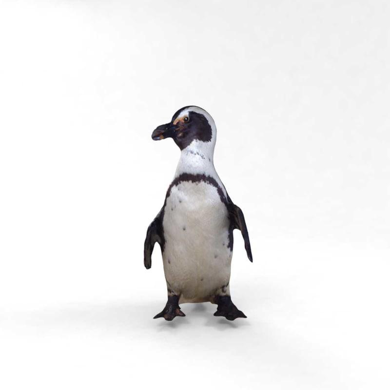 3D penguin slow photorealistic model