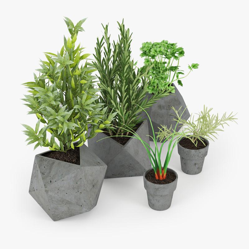 3D kitchen plant