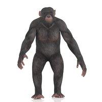 3D chimpanzee model