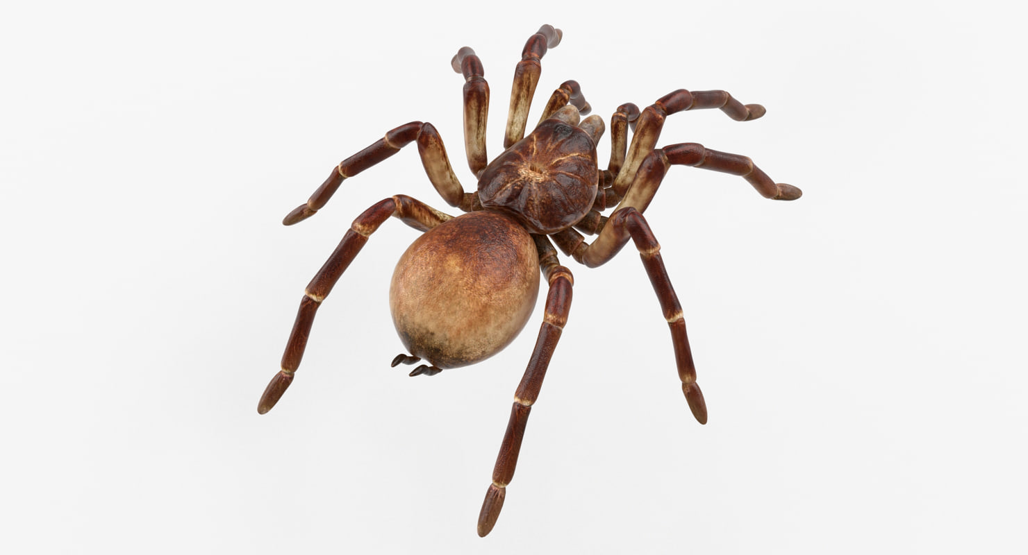 goliath birdeater rigged 3D