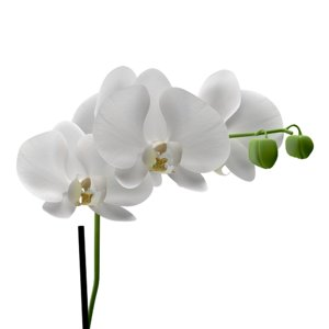 orchid interiors model
