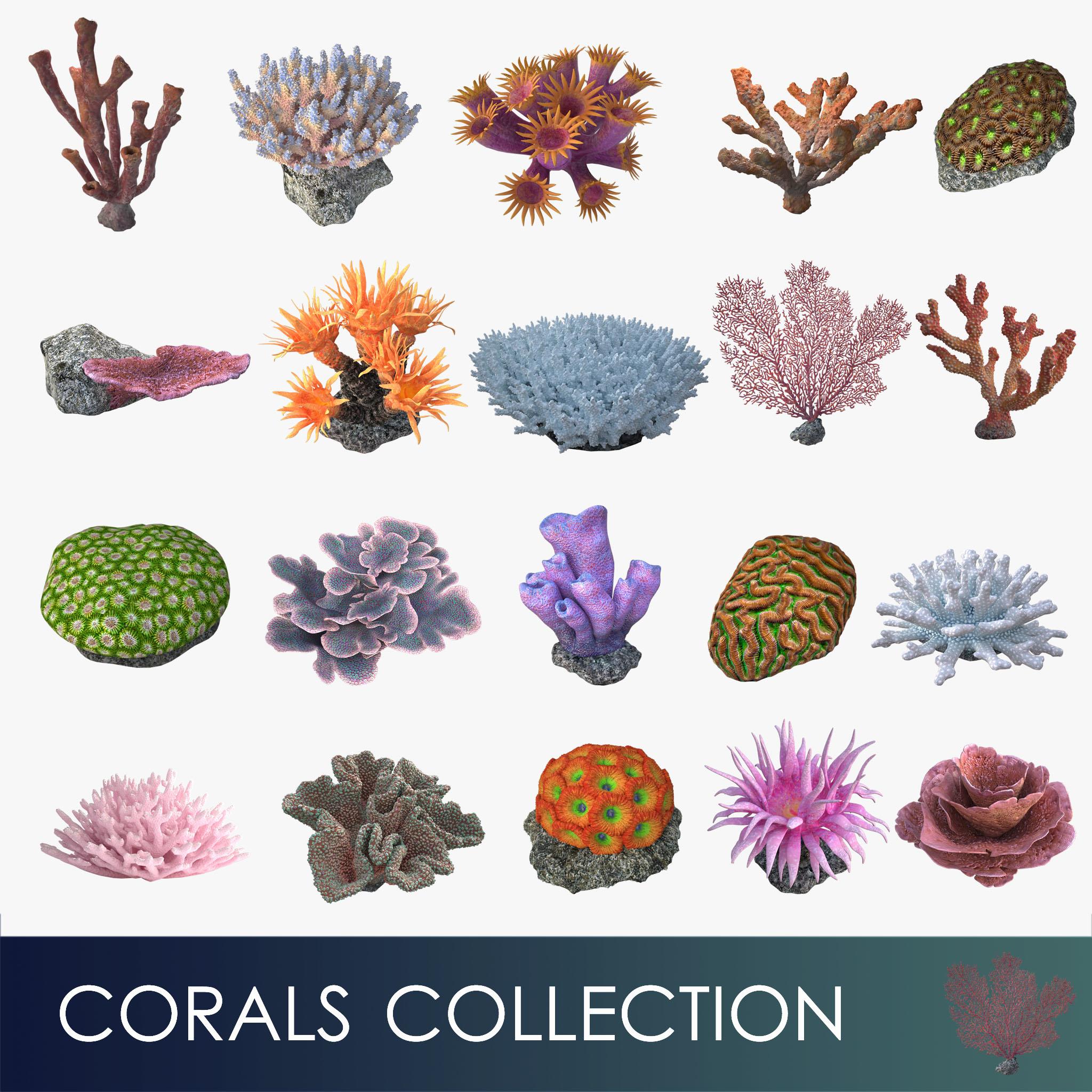 corals sun brain 3D model