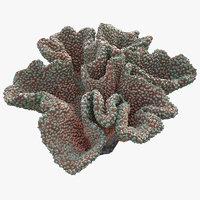 3D coral mushroom
